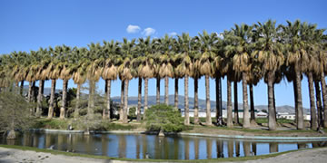 park with palm trees in the city of motril