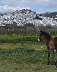 salobrena village rock and horse