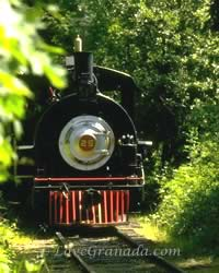train in the forests